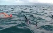 Rùng mình 5 người bị bao vây và tấn công bởi... cá heo ở bãi biển