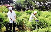 Bộ sưu tập cây thuốc Nam hiếm có ở trại rắn Đồng Tâm