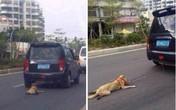 Bị săn lùng gắt gao vì dùng xe kéo lê chó tới gần chết