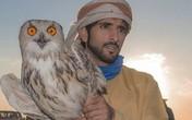 Sở thích nuôi quái thú độc, dị của Thái tử Dubai điển trai