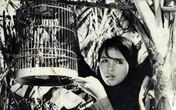 """Cuộc đời đầy nước mắt của """"con chim vành khuyên"""" Tố Uyên"""