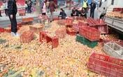Kinh hoàng hàng nghìn quả trứng trên xe tải đổ xuống đường