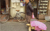 Cụ ông dắt rùa khổng lồ dạo phố gây xôn xao dân mạng