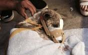 Chú chó bị buộc chặt mõm đã được giải cứu