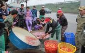 Chợ cá lớn nhất Hà Nội rực vàng ngày ông Công, ông Táo