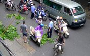 Hà Nội: Cành gây gãy rơi vào người đi đường