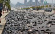 Choáng trước cảnh 7 tấn cá phủ kín mặt đường