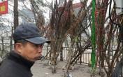Xem đào rừng về Thủ đô, giá cao ngất ngưởng