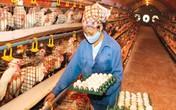 Cách lựa chọn trứng chất lượng, không chứa dị vật bên trong