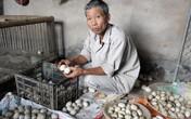 Hải Phòng: Hai vạn quả trứng vịt bị trả về, hàng chục hộ dân điêu đứng