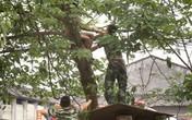 Người đàn ông khỏa thân đánh đu trên cây gây khiếp sợ