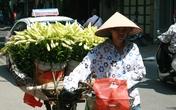 Sắc trắng hoa loa kèn gọi hè về trên đường phố Hà Nội