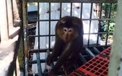 Người dân Đà Nẵng bỏ 5 triệu để cứu một chú khỉ khỏi... bàn nhậu