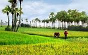 Thâm cung bí sử (73 - 6): Tình làng nghĩa nước