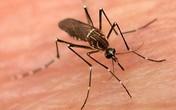 Mẹo nhỏ đơn giản giúp trong nhà không có 1 bóng muỗi
