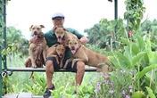 Rộ mốt nuôi chó Pit Bull: Những nguy hiểm rình rập