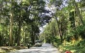 Ngỡ ngàng vẻ đẹp rừng cây Săng Lẻ ở xứ Nghệ