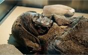 Tiết lộ thức ăn của xác ướp 2.000 tuổi trước khi chết