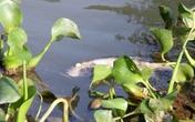 Thả hạt độc làm nổ mắt cá để đánh bắt