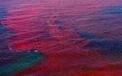 Những vụ cá chết hàng loạt do thủy triều đỏ trên thế giới gây sốt