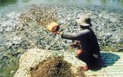 Trung Quốc ồ ạt thu mua cá tra miền Tây