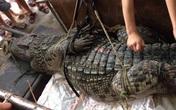"""Hé lộ nguồn gốc cá sấu """"khủng"""" ở hồ câu Hà Nội"""
