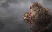 Những bức ảnh du lịch đẹp ngỡ ngàng trong cuộc thi ảnh National Geographic 2016