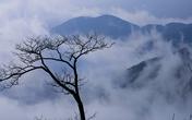 Ngây ngất với biển mây Tà Xùa bồng bềnh như chốn tiên cảnh
