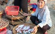 Hàm lượng kim loại nặng trong cá biển tại Hà Tĩnh ở ngưỡng cho phép