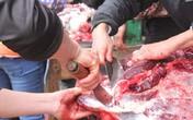 3 triệu đồng/kg thịt trâu chọi, muốn mua phải xếp hàng