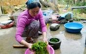 Đặc sản rêu đá trường thọ ở Hà Giang
