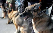Tiết lộ về đội chó nghiệp vụ bảo vệ Tổng thống Mỹ công du