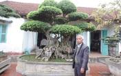 Thăm vườn cây cảnh hàng chục tỷ của lão nông dân Hà thành