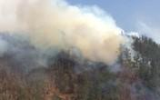 Phóng hỏa đốt rừng vì... bị phê bình