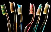 Kinh hoàng ổ vi khuẩn trên bàn chải đánh răng