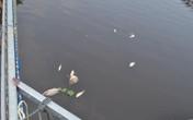 Nghệ An: Cá chết bất thường trên sông Bùng vì... thiếu oxy