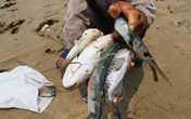 Các giải pháp ứng phó với hải sản chết bất thường tại 4 tỉnh miền Trung