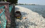 Hơn 70 tấn cá chết ở hồ Tây được tiêu hủy