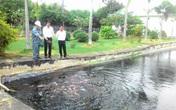 Lạ lùng chuyện những chú cá bơi lội trong bể chứa nước thải bệnh viện