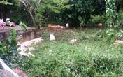 Quảng Bình sau lũ: Hàng loạt công việc nặng nề