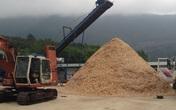 Thanh Hóa: Bùng phát hàng loạt các cơ sở chế biến gỗ dăm không phép