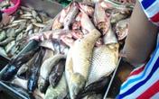 """Chợ Dịch Vọng Hậu (Hà Nội): Sáu cơ quan liên ngành kiểm tra nhưng """"không phát hiện cá ươn""""(?!)"""