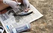Vụ cá chết hàng loạt ở miền Trung: Tối đa 5 ngày nữa  sẽ có kết luận chính thức