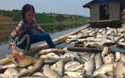 Dân điêu đứng vì cá chết trắng sông