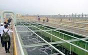 Bộ trưởng Bộ TN&MT yêu cầu: Bể xử lý chất thải Formosa phải nuôi được cá