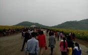 Nghệ An: Đường tắc hàng giờ vì… hoa!