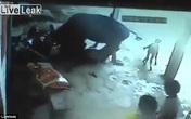 Chú bò nỗ lực ngăn chặn người giết hại cô gái trẻ