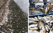 Hiện tượng cá chết hàng loạt năm 2016: Sự trùng lặp ở nhiều nước cũng vào tháng 4