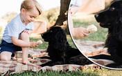 Vợ chồng Kate bị chỉ trích vì để George cho chó ăn kem