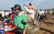 """Cá voi """"khủng"""" chết ở vùng biển Nghệ An: Thanh niên đội nắng nhặt rác"""